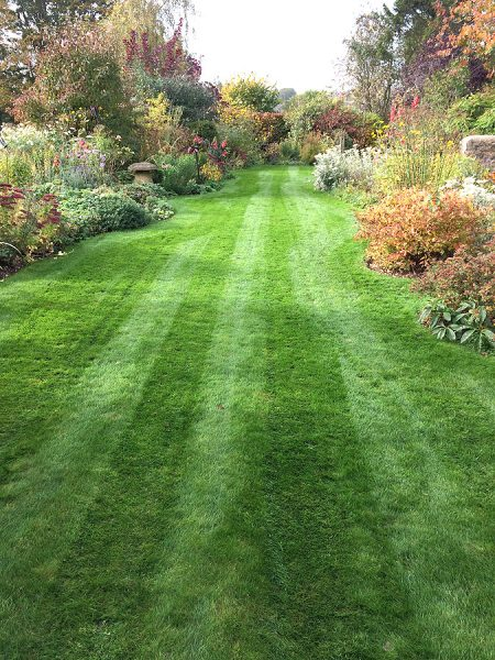 greenway-lawns-perfect-lawns1